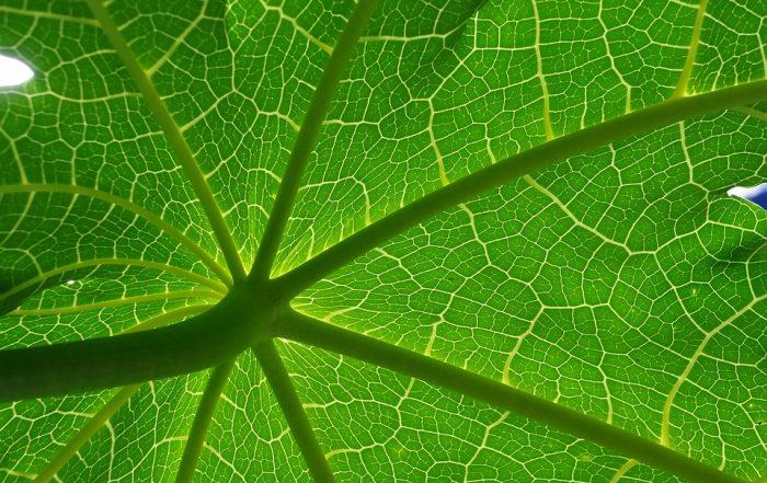 Groen ondernemen